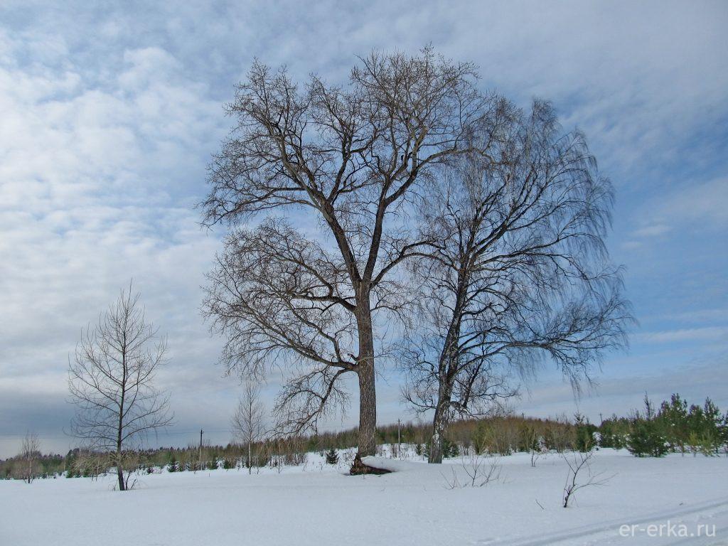 Деревья на севере